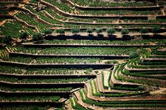 Socalcos do Douro Portugal, Great Places To Travel, Douro Valley, Port Wine, Natural, City Photo, Vineyard, Cruise, River