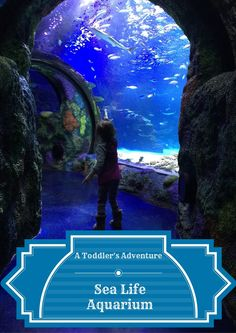Take a toddler to an aquarium for the first time and see the under sea world in a whole new way!