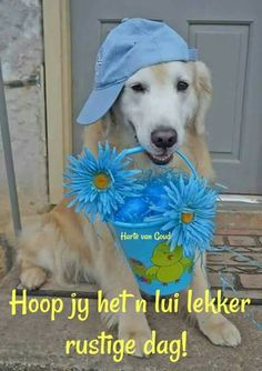 Hoop jy het n lekker dag. Best Dogs For Families, Family Dogs, All Dogs, Baby Animals, Funny Animals, Cute Animals, Whoodle Puppy, Feel Good Pictures, Lekker Dag