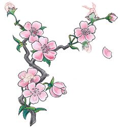Cherry Blossom Illustration Pink Flowers Clipart | Just Free Image Download