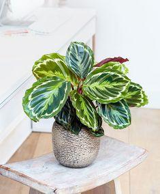 Plante de interior care nu au nevoie de lumina - Case practice