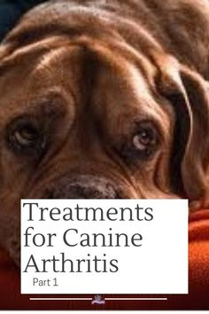 Traditional Treatments For Canine Arthritis Canine arthritis will afflict most dogs as they age. Unfortunately, dog owners and veterinarians rarely notice Alternative Treatments, Dog Care Tips, Animal Crafts, Dog Owners, Arthritis, Dog Beds, Pets, Reading, Image Link