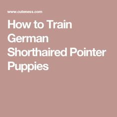 How to Train German Shorthaired Pointer Puppies