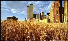 Agnes Denes, Wheat Field, 1983, New York, Land Art