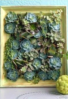 With winter quickly approaching, succulents    are  a   pretty  and easy way to brighten  up    your home.   They even make quite a st...