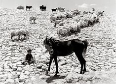 Carmel Plateau, Israel - by Israëlis Bidermanas (1911 - 1980), Lithuanian/Jewish