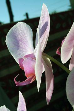 macrophotographie fleurs © MACH2COM