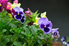 Gardening temptation: Do research before ordering from online plant nurseries or catalogs | 						NOLA.com