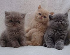Three little kittens all in a row…