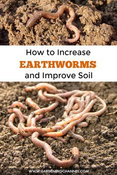 Container Gardening For Beginners Learn how to improve soil and build a habitat earthworms will love, attracting them to your garden soil. Organic Soil, Organic Gardening Tips, Organic Pesticides, Organic Farming, Indoor Gardening, Natural Farming, Sustainable Gardening, Kitchen Gardening, Gardening Hacks