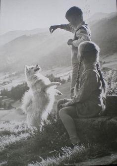 playing with a white dog Samoyed Dogs, Pomeranians, Dog Photos, Dog Pictures, Japanese Spitz Dog, Spitz Pomeranian, Celebrity Dogs, German Spitz, Spitz Dogs