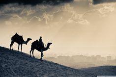 Camels Egypt Cairo Nature Desert Sand Sunrises and sunsets