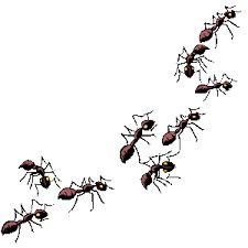 Ants : Why Are Ants All The Same