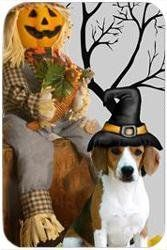 """Beagle Tempered Large Cutting Board Halloween by Doggie of the Day. $39.99. Durable. Dishwasher Safe. Please allow 4 days to ship. 15.74"""" x 11.8"""" x 5/32"""". Spice up your kitchen with a fabulous cutting board! These cutting boards are perfect for home chef's and restaurant owner's alike. This is a specially coated glass cutting board that is durable and dishwasher-safe."""