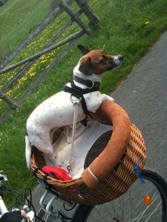 Radreisen mit Hund – Fahrradurlaub in Mecklenburg #hunde #dogs #travel #reisen #urlaub