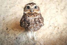 dear owl..