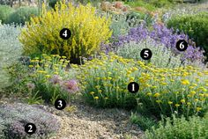 Plants that tolerate frost and are drought resistant, to create a sustainable and low maintenance garden. Landscaping Plants, Outdoor Landscaping, Front Yard Landscaping, Outdoor Gardens, Dry Garden, Gravel Garden, Garden Plants, Allium Christophii, Mediterranean Plants