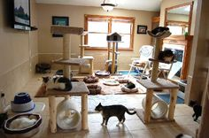 Resultado de imagem para Cat Room Ideas for Multiple Cats Cat Play Rooms, Dog Rooms, Cat Fence, Cat Hotel, Outdoor Cat Enclosure, Diy Cat Toys, Cat City, Cat Playground, Cat Room