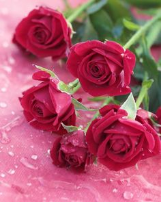 Good Morning to Happiness – Letter of Wish - Blumen Beautiful Rose Flowers, Pretty Roses, Romantic Roses, My Flower, Flower Power, Beautiful Flowers, Rose Pictures, Flower Wallpaper, Pink Roses