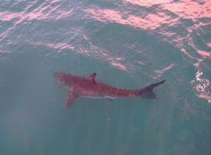 Imagem de shark, water, and pink Water Aesthetic, Blue Aesthetic, Aesthetic Photo, Aesthetic Pictures, Ragnor Fell, Spirit Fanfic, Catty Noir, Breath Of The Wild, Jojo's Bizarre Adventure