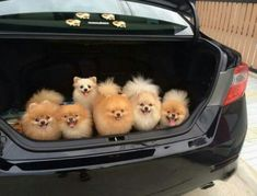 Officer pop the trunk..  Me..I can explain :-)