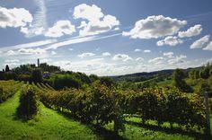Vineyards around Conegliano hills. Vineyard, Banner, Italy, Eat, History, World, Travel, Outdoor, Italia