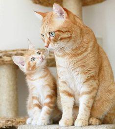 "awwww-cute: ""My dad is so cool! (Source: http://ift.tt/2g8Srp2) """