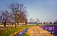 Colorful Fields Of Holland by Jenny Rainbow #Spring #Bloom #Blossom #Boat #Amsterdam #Canal #Europe #Holland #Purple #SpringTime #JennyRainbowFineArtPhotography #ArtForHome #InteriorDesign #HomeDecor