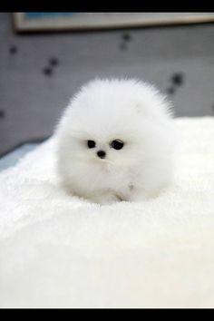 It's so fluffy I'm gonna die!