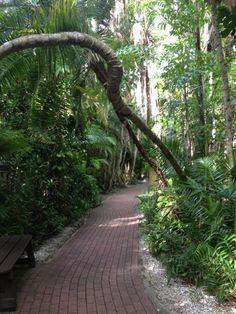 Sarasota Jungle Gardens - Sarasota, FL www. Sarasota Florida, Old Florida, Florida Vacation, Florida Travel, Central Florida, Vacation Spots, Clearwater Florida, Florida Honeymoon, Florida Trips