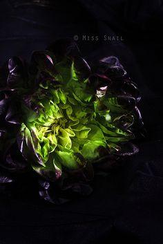 butterhead lettuce- amazing photo by Vivian An.