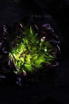 butterhead lettuce- amazing photo by Vivian An.