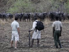 #zambia #buffalo walk