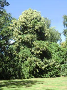 Dit is die grote boom met bloemen.