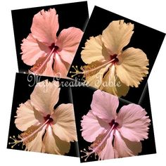 Digital Download Photography Set of 4 Hibiscus by MyCreativeTable