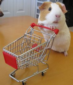 † ♥ ✞ ♥ † Ooooh, they're having a sale on baby carrots, better stock up! :D  #guineapig  † ♥ ✞ ♥ †