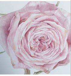 Watercolour original paintings and colored pencils by AmandasArtZA Floral Watercolor, Watercolor Paintings, Original Paintings, Watercolors, Handmade Items, Handmade Gifts, Beautiful Roses, Art For Sale, Colored Pencils