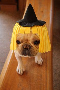 ハロウィン魔女犬ヅラです☆ハロウィンの仮装にピッタリのかぶり物です♪オフ会やプレゼントにもオススメです(^^)*前後にゴムが入っているスヌードタイプなのでズレ...|ハンドメイド、手作り、手仕事品の通販・販売・購入ならCreema。