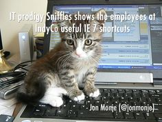 Cat Photos Captioned By Comedians To Help You Procrastinate - 20 hilarious cat photos captioned comedians