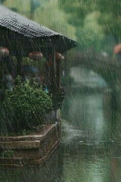 everyday a different color, beautiful gifs, soft goth, nature. Rainy Mood, Rainy Night, Rainy Weather, Rainy Day Photography, Rain Photography, White Photography, Color Photography, Rain Wallpapers, Iphone Wallpapers