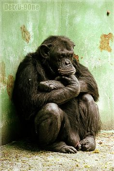Sad #detxu #detxu9one #sad #triste #mono #monkey #simio #animal #animals #animales