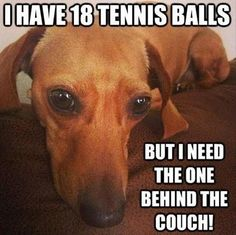 I have 18 tennis balls, but I need the one behind the couch!