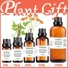 100% pure plant Herbal medicine oils Incised Notopterygium herbal oil Essential oils traditional Chinese medicine oil #Affiliate