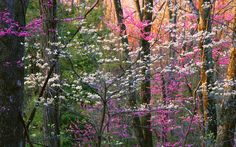 Bright beautiful flowers in the magical forest, peaceful.