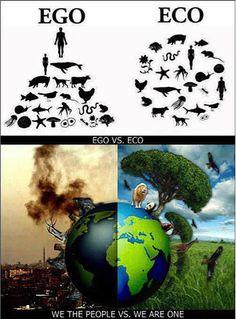 NGO ILFA Association | 環境保護活動