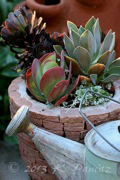 Succulent container Succulent Gardening, Succulent Pots, Cacti And Succulents, Container Gardening, Different Types Of Succulents, Dish Garden, Succulents In Containers, Love Garden, Succulent Arrangements