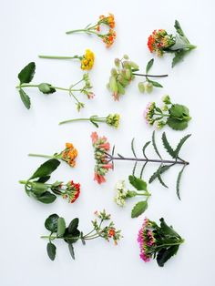 De Kalanchoë is een kleine en oersterke vetplant met karakteristieke felgekleurde bloemetjes. Deze bloemen komen voor in allerlei kleuren, variërend in de kleuren wit, roze, rood, geel, oranje of paars. De kleuren steken prachtig af tegen het glanzende groene blad.