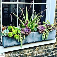 Succulent window box planter Spider Plant Shop - All About Gardens Diy Planter Box, Window Planter Boxes, Diy Planters, Indoor Window Planter, Indoor Window Boxes, Fall Planters, Planter Ideas, Garden Planters, Succulents In Containers