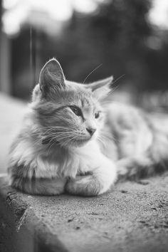 Pretty Kitty ~ CoolCat❤TreeHouse
