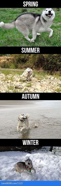 Everything makes a dog happy. There is no seasonal depression for them :)
